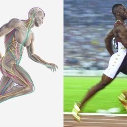 Anatomy: Running to form