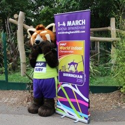 Ruby the Red Panda unveiled as Birmingham 2018 mascot
