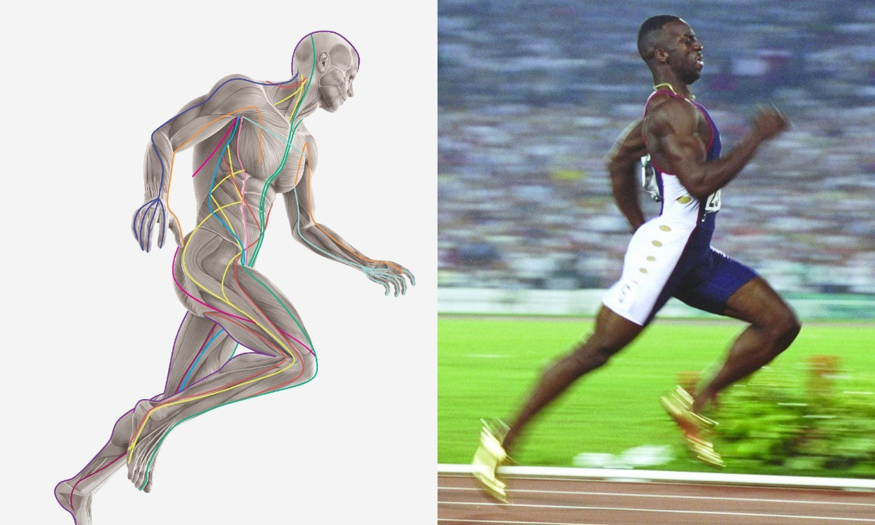 Anatomy: Running to form
