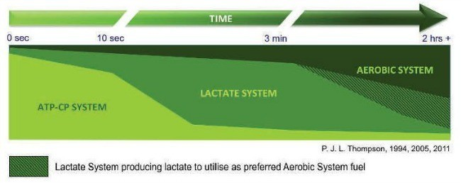 lactate_system